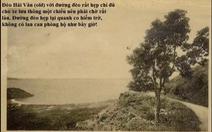 Thông cô đơn trên đèo Hải Vân nhiều bạn trẻ 'check-in' là cổ thụ thời Pháp?