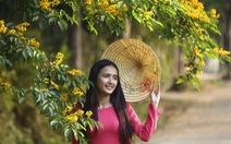 Mùa hoa sưa vàng đẹp như tranh ở xứ Quảng
