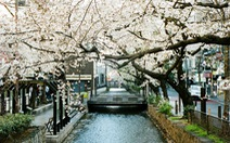 Nhật Bản cổ kính và rực rỡ qua ảnh phim