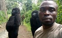 Khỉ đột tạo dáng chụp ảnh selfie cùng kiểm lâm