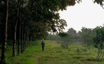 Kiểm tra việc giám đốc lâm trường chiếm đất rừng