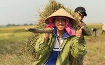 Cả lớp ra đồng gặt lúa giúp bạn, phụ huynh cũng góp tay