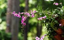 Check-in công viên Tao Đàn ngắm hoa lan trong 'Sắc màu nhiệt đới'