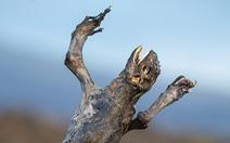 Sốc với hình ảnh cự đà Galapagos chết khô do biến đổi khí hậu