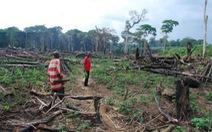 4 nước sở hữu 'lá phổi xanh' của Trái đất đánh mất rừng nhiều nhất thế giới