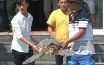 Chủ quán nhậu 9 lần mua rùa, vích loại lớn thả về biển