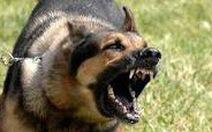 2 cha con tử vong vì bị chó dại cắn