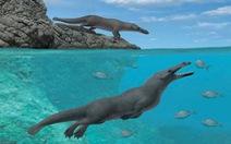 Cá voi cổ đại từng giống... chó