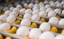 Úc phát cảnh báo trứng nhiễm khuẩn salmonella