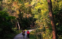 Khám phá rừng phong lá đỏ Tam Ban