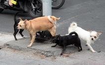 Trị chó thả rông, cần một 'án lệ'