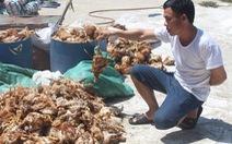 Người dân ném đá trại gà, 1.200 con gà bị chết