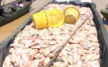Dân nuôi cá trên sông La Ngà mất hơn 330 tấn