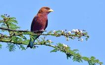 Theo tiếng gọi chim hoang dã