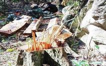 Khởi tố thêm 6 người trong vụ phá rừng ở Vườn quốc gia Phong Nha - Kẻ Bàng