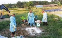 Hà Tĩnh xuất hiện ổ dịch tả heo châu Phi đầu tiên