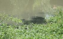 Hộ chăn nuôi cá lóc vô tư xả thải, nông dân kêu trời vì nước ô nhiễm