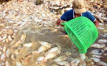 Cá lồng bè chết trắng sông La Ngà đã lên đến gần 1.000 tấn