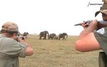 Cho săn lại, 130.000 voi ở Botswana vào tầm súng bắn giết