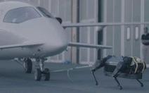 Chó robot 130kg kéo máy bay 3 tấn