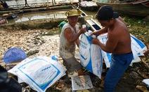 Cá bè chết tại La Ngà: Thông số ô nhiễm hữu cơ vượt chuẩn nhiều lần