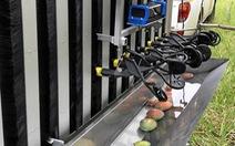 Úc thử nghiệm robot hái xoài đầu tiên trên thế giới