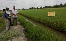 Đề tài cải thiện lúa Một bụi đỏ bỗng dưng bị loại vì… chủ nhiệm chuyển công tác
