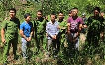 Video hạ độc 3.500 cây thông Đà Lạt bằng máy khoan điện và thuốc diệt cỏ