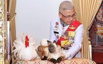 Con mèo Xiêm trong lễ đăng cơ của vua Thái là mèo giả hay thật?