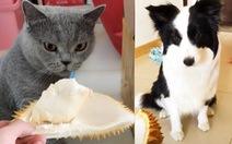 Bật cười mèo ngất xỉu, chó che mũi khi ngửi mùi sầu riêng