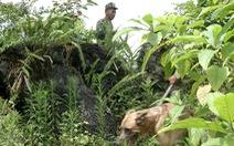 10 chiến sĩ và 2 chó nghiệp vụ tìm ra xác bà cụ 80 tuổi trong rừng