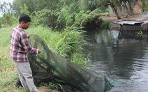 Nuôi vịt xả thải ra kênh: bò hết nước uống, cá tôm không còn