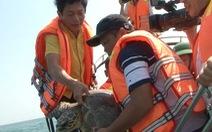 Ông Lại thả rùa về biển