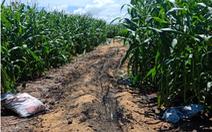 An Giang: Doanh nghiệp mua đất, tự mở thêm đường mòn xuyên biên giới