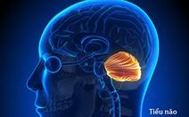 Mất điều hòa và rối loạn chức năng vận động tiểu não