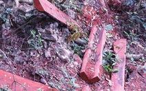 Để mất hơn 100 m3 gỗ quý, giám đốc vườn quốc gia bị đề nghị kiểm điểm