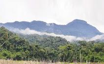 Phát hiện hơn 1.000ha rừng sâm ba kích tím tự nhiên