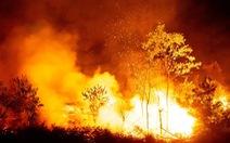 Dân đốt cành lá keo rụng, rừng lại cháy ngùn ngụt trong đêm Hà Tĩnh