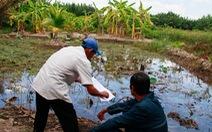 TP.HCM nghiên cứu thí điểm cho xây công trình trên đất nông nghiệp