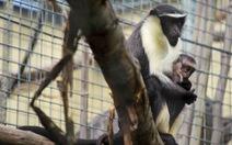 Con người đẩy thêm 7.000 loài đến bờ vực tuyệt chủng
