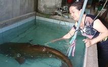Video: Một người dân câu được cá leo 80kg ở sông Krông Ana