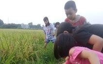 Mùa hè đưa trẻ ra đồng
