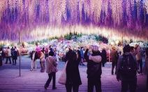 Vì sao Nhật Bản ngừng cấp visa đoàn cho 8 công ty du lịch Việt Nam?