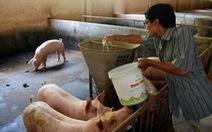 Đề xuất cho người chăn nuôi heo khoanh nợ, giãn nợ, giảm lãi vay