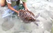 Video: Xúc động cuộc giải cứu rùa biển thoát khỏi rác thải nhựa
