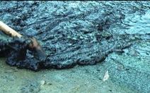 Khu nuôi tôm xả nước hôi thối ra biển, dân nhiều bữa không nuốt nổi cơm