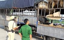Xe chở heo vi phạm 'lọt' qua 6 tỉnh, bị chặn đứng ở cửa ngõ Sài Gòn