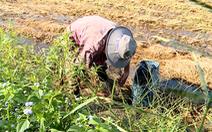 Video: Cách săn bắt chuột cống nhum ở Miền Tây