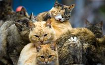 Cho mèo hoang ăn dù bị cấm, cụ bà Mỹ sẽ phải nhận án tù?