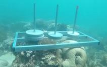 'Cuộc đua kỳ thú' bị phản ứng vì nghi làm tổn hại rạn san hô Phú Yên